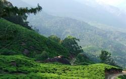 Восток, зеленый чай, Индия, Китай, церемония, чай, cha