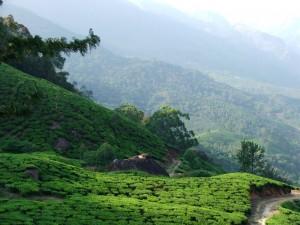cha, Восток, дзен, зеленый чай, Индия, Китай, церемония, чай, чань