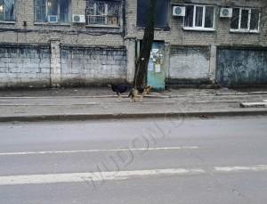 android, HDR, Lenovo K860, Донецк, мобилография, смартфон, фотография